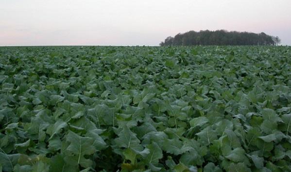 taimekaitsevahendite sisalduspinna- ja põhjavees