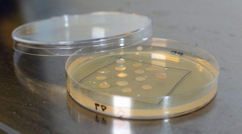 mereplasti söövad bakterid