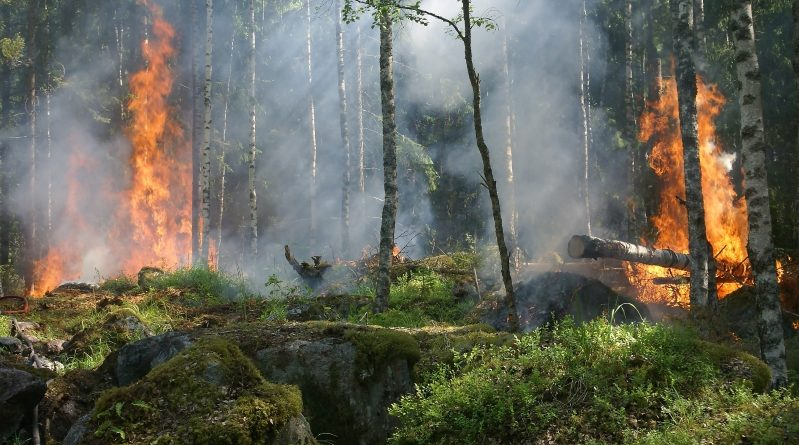 Eesti rohetehnoloogia abil kliimamuutuste mõjusid leevendama