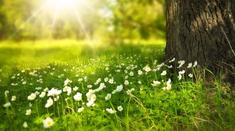 Keskkonnalubade süsteemi muudetakse lihtsamaks