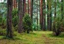 metsamajandus mõjutab puistute süsiniku sidumise võimet. Fossiilkütuste põletamine koos puiduga