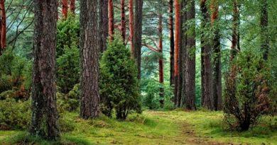 metsamajandus. Eesti seisukohad Euroopa rohelise kokkuleppe kohta kinnitati