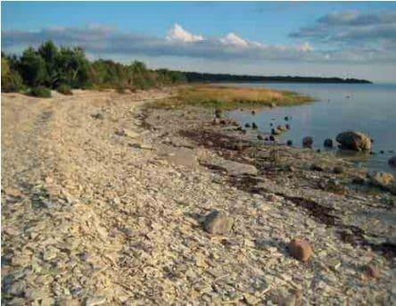 Vesiku kihtide paljandis Elda poolsaare läänerannal Saaremaal