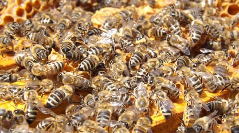 Mesi pestitsiidide jäägid