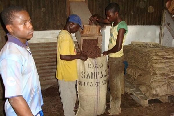 Komisjon käivitab kestlikuma kakaotootmise algatuse