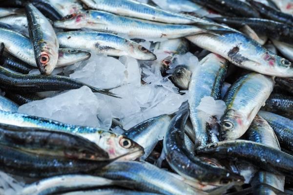 Eestis enim püütud kalades jääb saasteainete sisaldus lubatud piiridesse