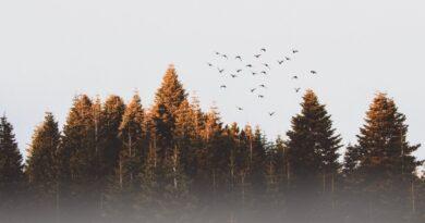 Eestist esitati 15 keskkonnaprojekti üleeuroopalisse LIFE programmi taotlusvooru
