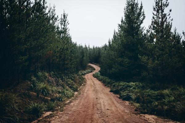 Metsade süsiniku sidumine sõltub ilmastikuoludest