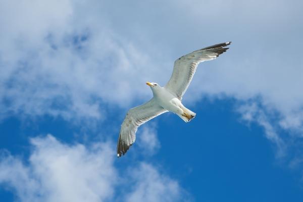 Vabatahtlikud tulevad naftareostuse korral appi linde päästma