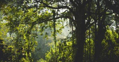 parlament soovib peatada metsade hävinemine