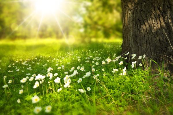 Kolm Eesti ettevõtet valiti keskkonnaauhinna finalistide hulka