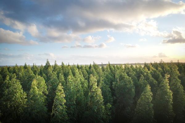 Eesti peaks tõstma kliimaambitsiooni, et saavutada kliimaneutraalsus